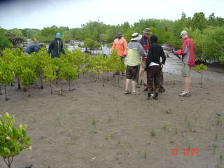 Team_mangroves